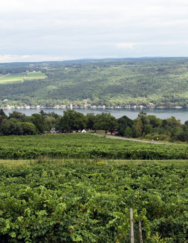 Wineries throughout the Finger Lakes